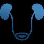 Νεφρά & Ουρητήρας
